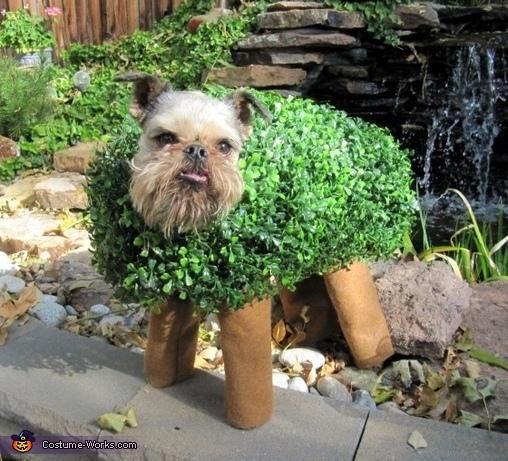 V-v-v-Vinny Pet!, Chia Pet Costume