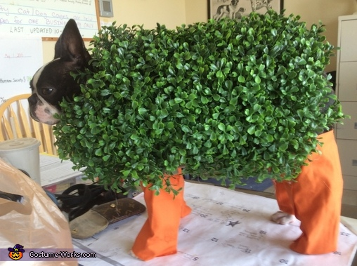 Chia Pet Dog Homemade Costume