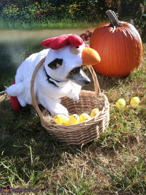 Chicken Head Dog Costume
