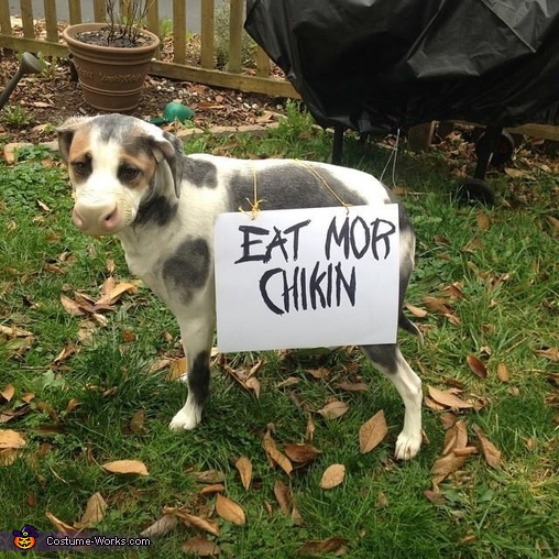 Chickfila Cow Dog Costume