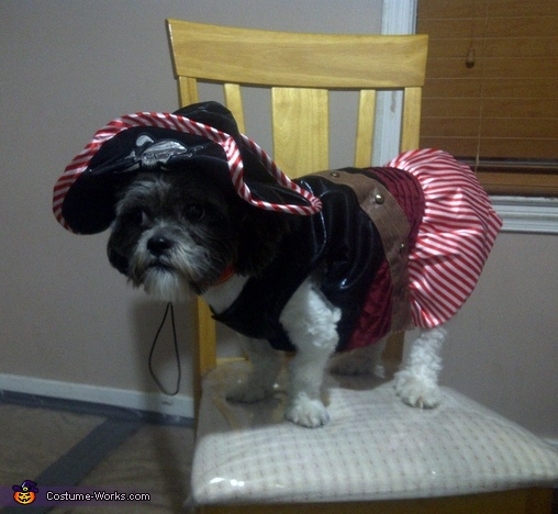 Chico the Pirate Dog Costume