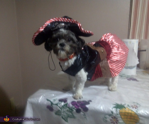 Chico the Pirate Homemade Costume