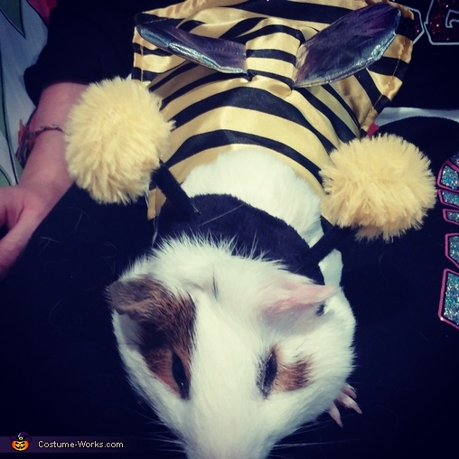 Snikers the bumble bee, Chillin Costume