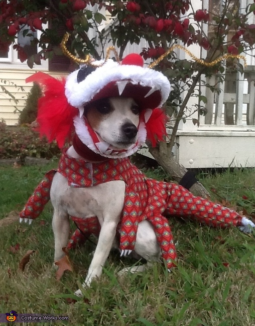 Chinese Dragon Dog Costume