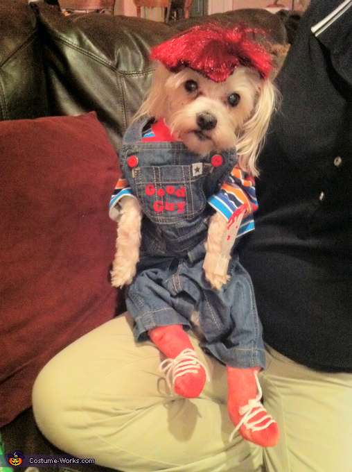 Chucky the Doll Homemade Dog Costume