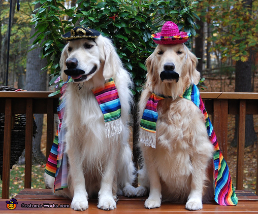 Cinco De Mayo Costume