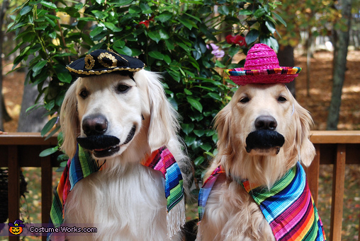 Duncan & Bailey, Cinco De Mayo Costume
