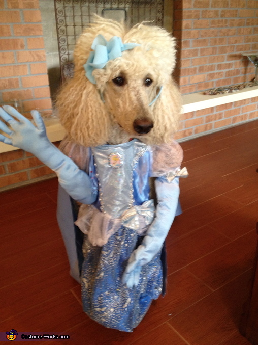 Cinderella Dog's Costume Idea