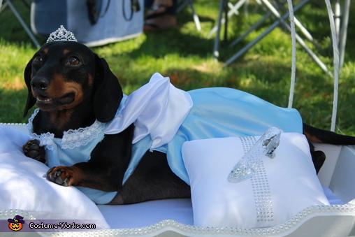 Cinderella Dog Homemade Costume