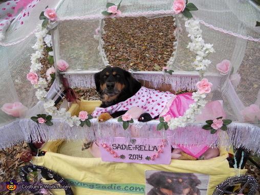 Sadie-rella in her carriage, Sadie-Rella Costume