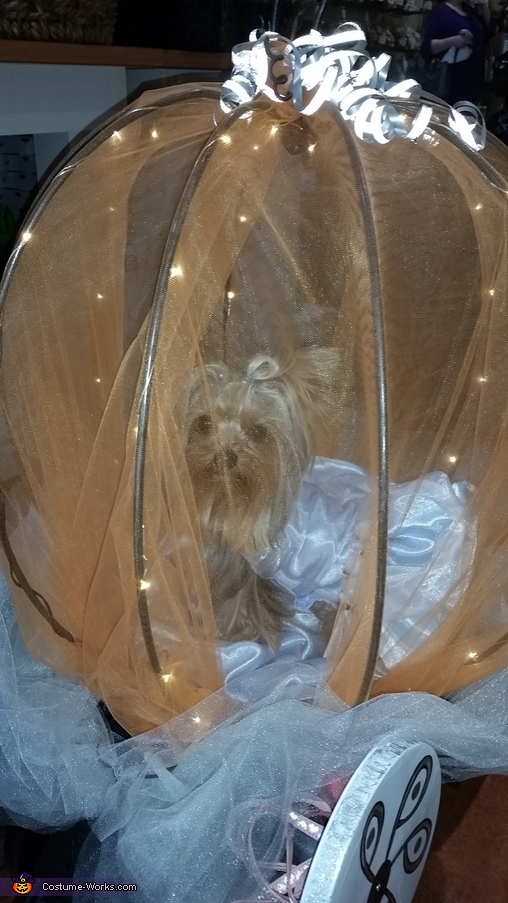 Close up of Cinderella, Cinderella Dog Costume