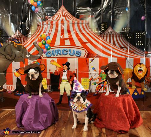 Circus Monkeys Costume