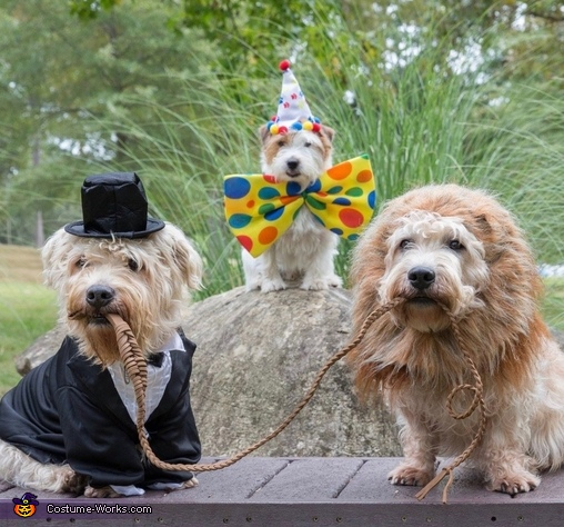 Cirque de Terrier Costume