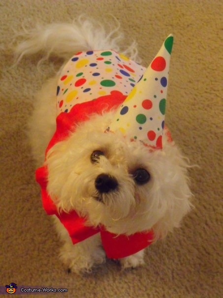 Coco as a Clown Costume