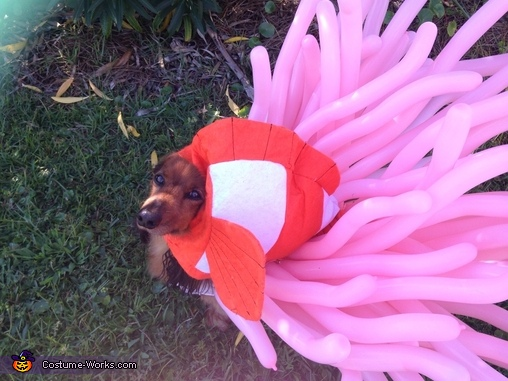Clown Fish and Anemone Dogs Costume