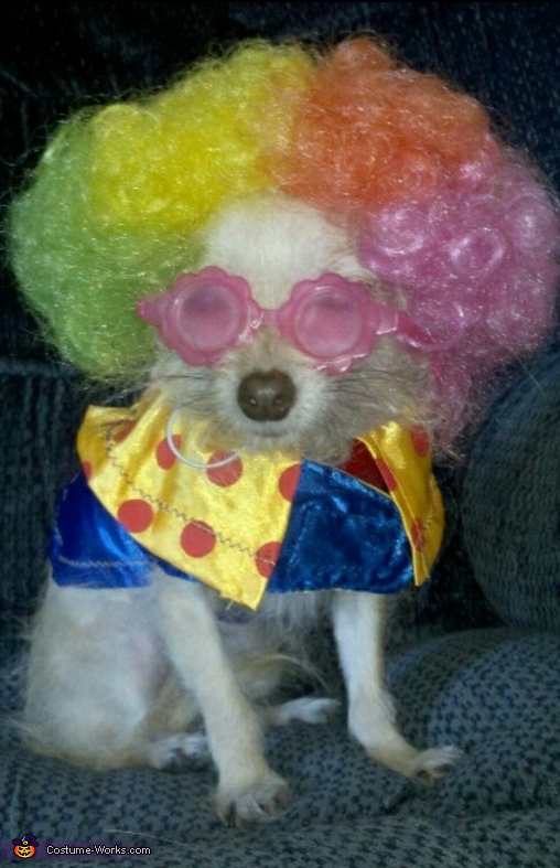 Clowning Around Dog Costume