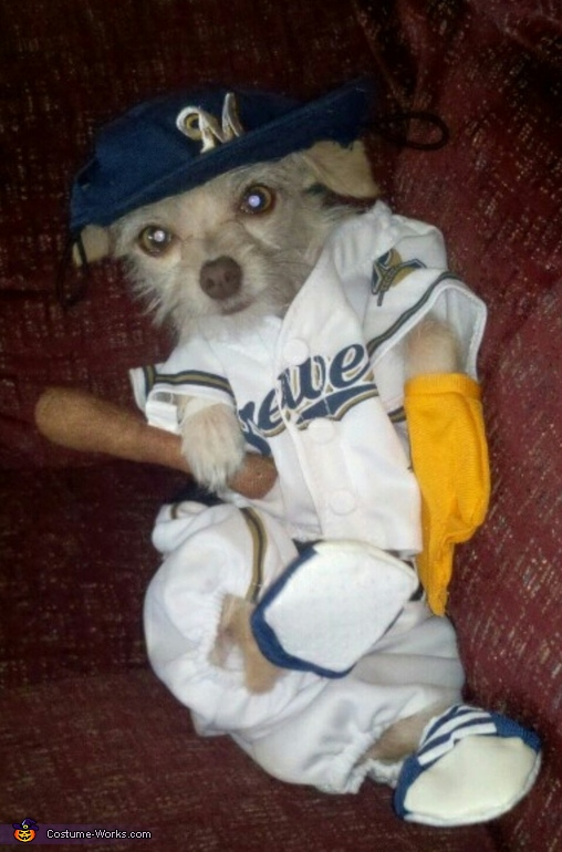 Baseball Player Dog Costume, Clowning Around Dog Costume