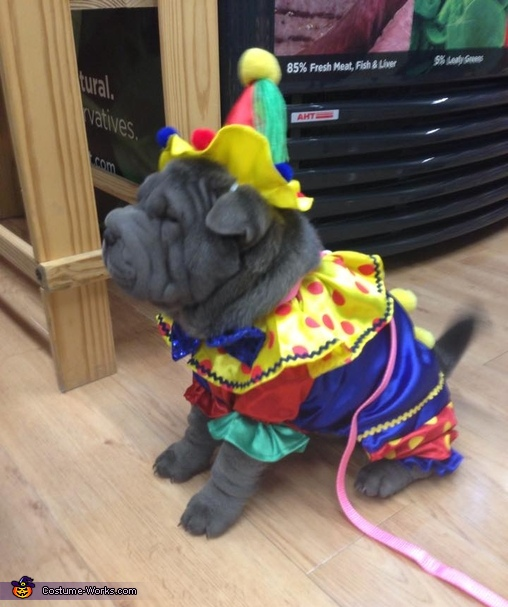 Clumsy Clown Dog Costume