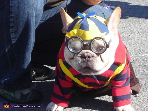 College Boy Dog Costume