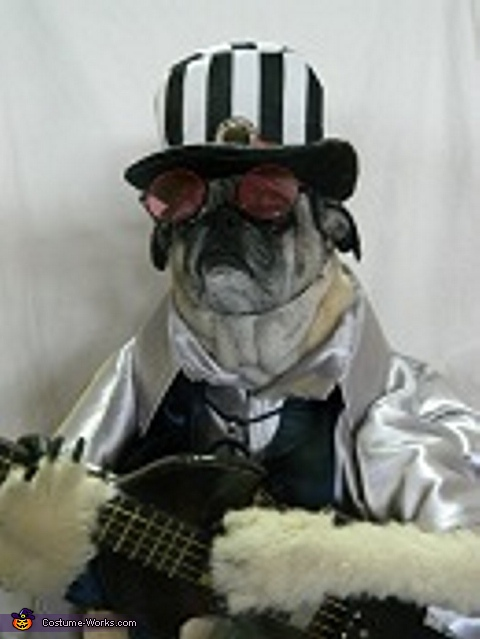 Cookie the vocalist and his bass guitar :'Arrow', Cookie and Queens 5 Rock Band Dog Costume