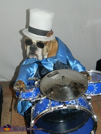 Little Lady and her blue outfit and blue drums, Cookie and Queens 5 Rock Band Dog Costume
