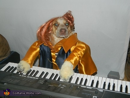 Lilu playing her keyboard, Cookie and Queens 5 Rock Band Dog Costume