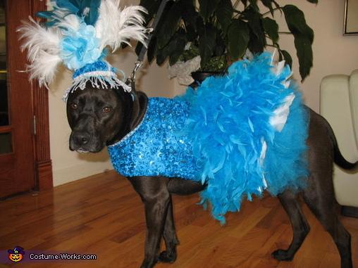 Copacabana Showgirl Dog Costume
