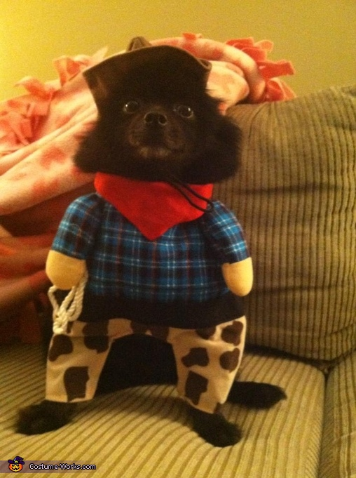 Save a horse....ride a cowboy, Cowboy Dog Costume