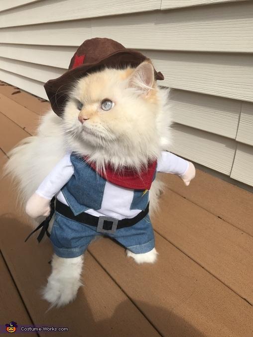 Cowboy Cat Costume , Photo 2/4