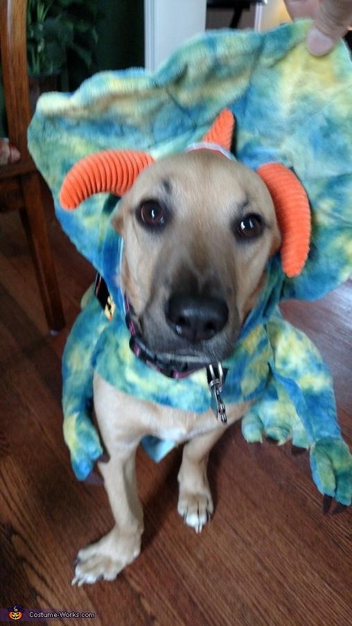 Dino Stewie, Cowboy Stewie Costume