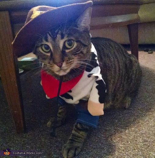Cowboy Kitty Costume