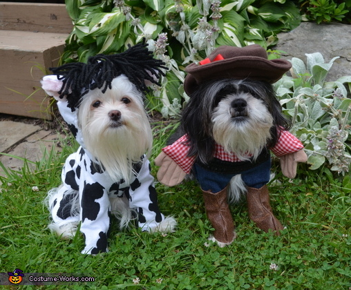 Cowgirl with her Cow Dogs Costumes