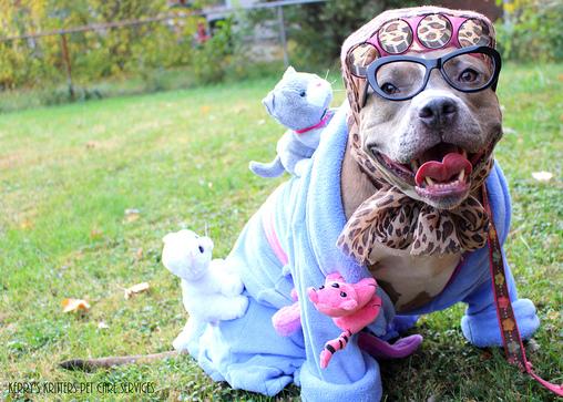 Dog's Crazy Cat Lady Costume