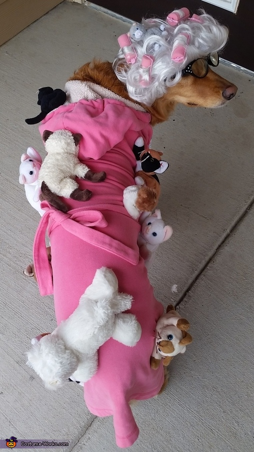 Crazy Cat Lady Dog Homemade Costume