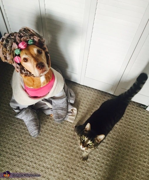Crazy Cat Lady Dog Costume Idea