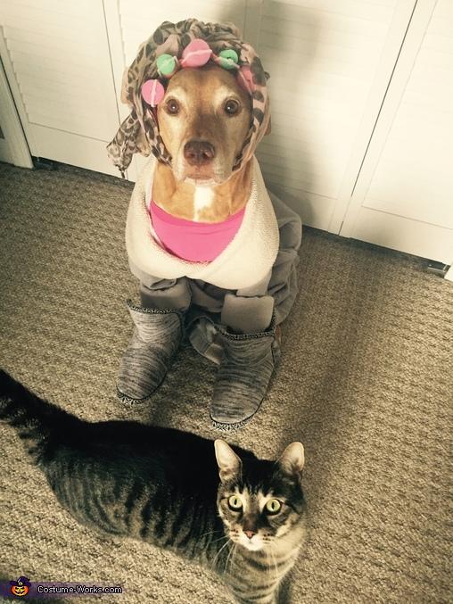 Crazy Cat Lady Dog Costume Idea