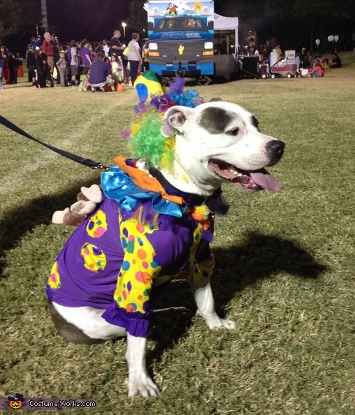 Cutest Clown Dog Costume