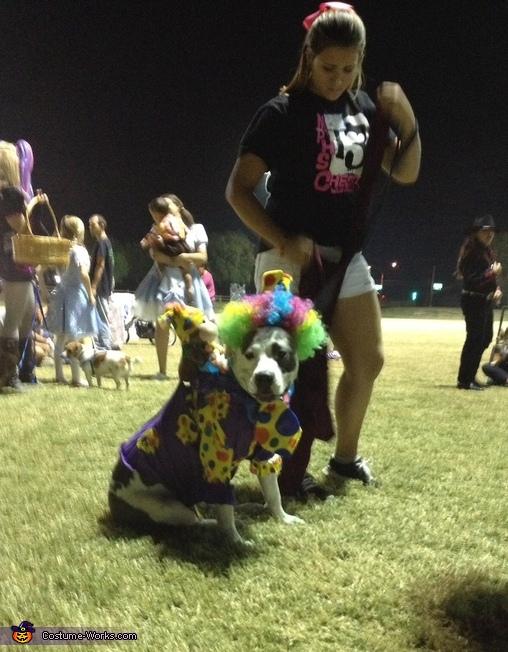 I'm so cute......., Cutest Clown Dog Costume