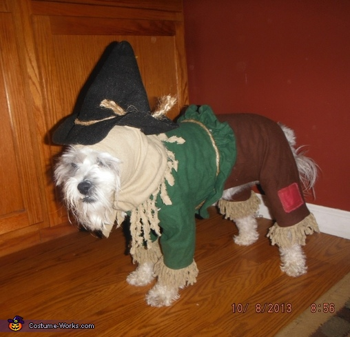Cutest Scarecrow Dog Costume