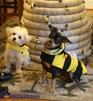 Cutie Bees Dog Costume