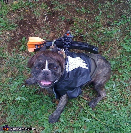 Daryl Dixon from the Walking Dead Dog Costume