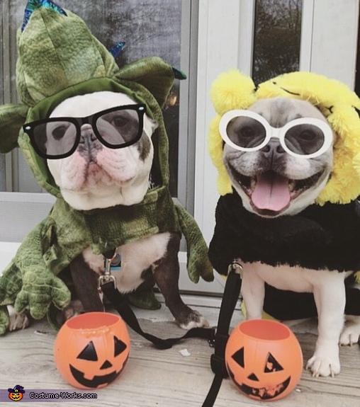 Dino and Bee Costume