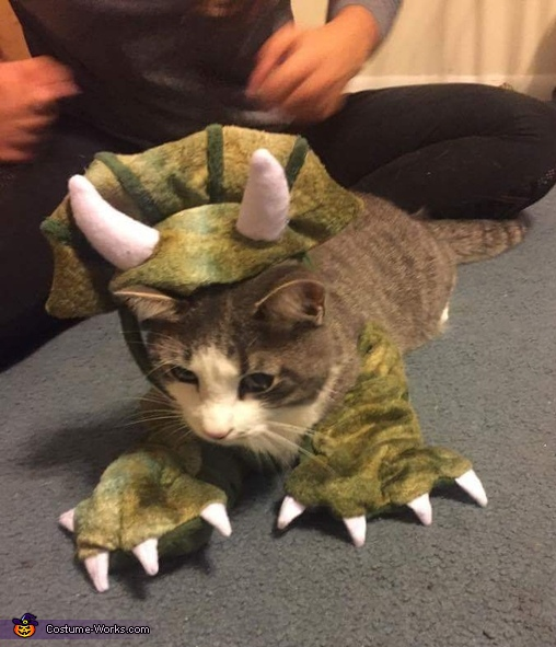 : cat dinosaur costume  - Germanpascual.Com