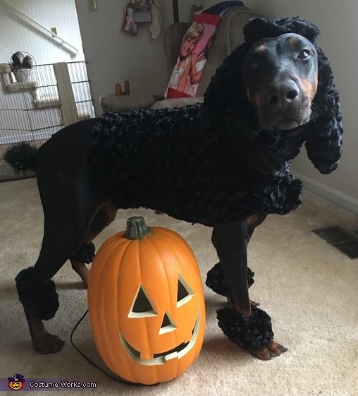 Dober-poodle Homemade Costume