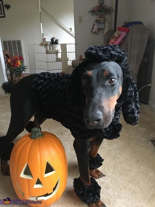 Dober-poodle Homemade Costume