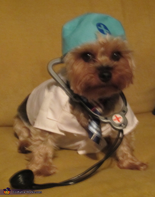 Doctor Dog Costume