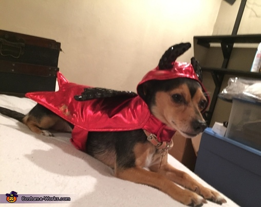 Cute Dog Devil Costume