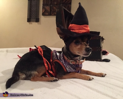 Witch, Cute Dog Devil Costume