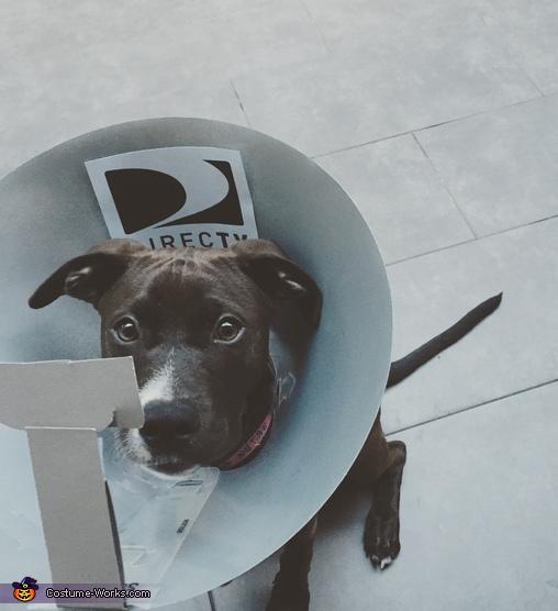 Dog Dish Costume