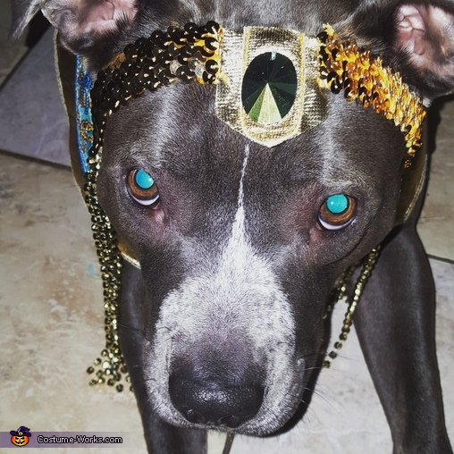 Dog of the Nile Homemade Costume